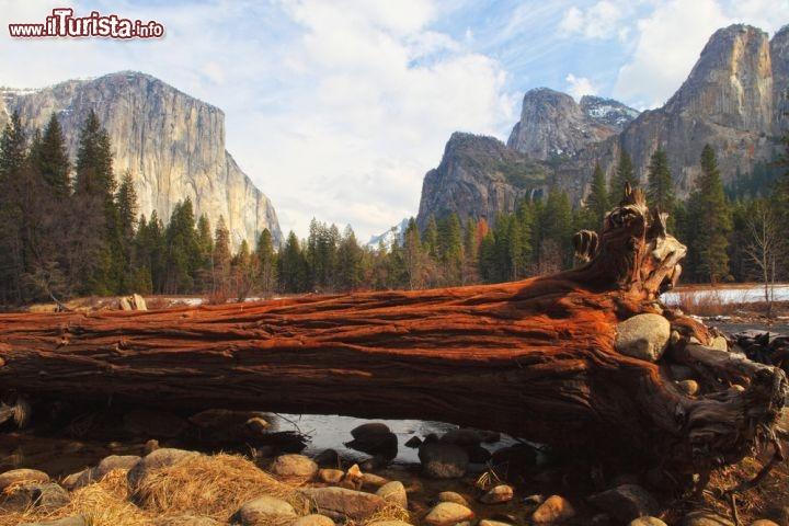 Albero caduto all 39 interno del parco nazionale foto for Cabine di alloggio del parco nazionale di yosemite