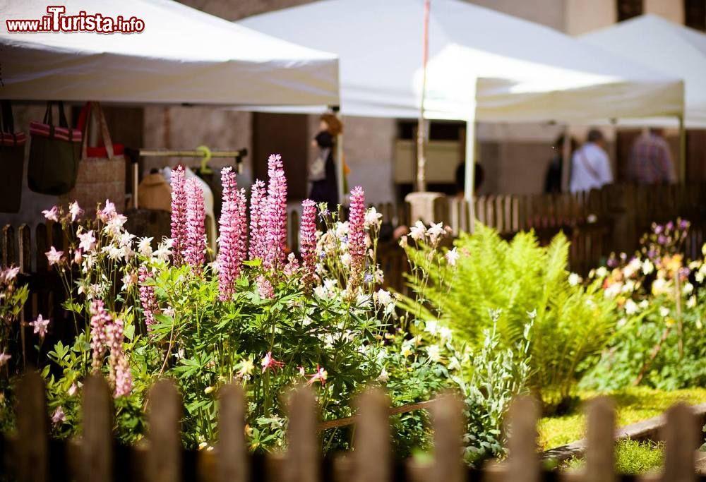 Festa delle erbe di primavera Forni di Sopra