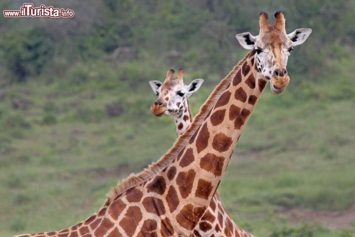 Le foto di cosa vedere e visitare a Nakuru