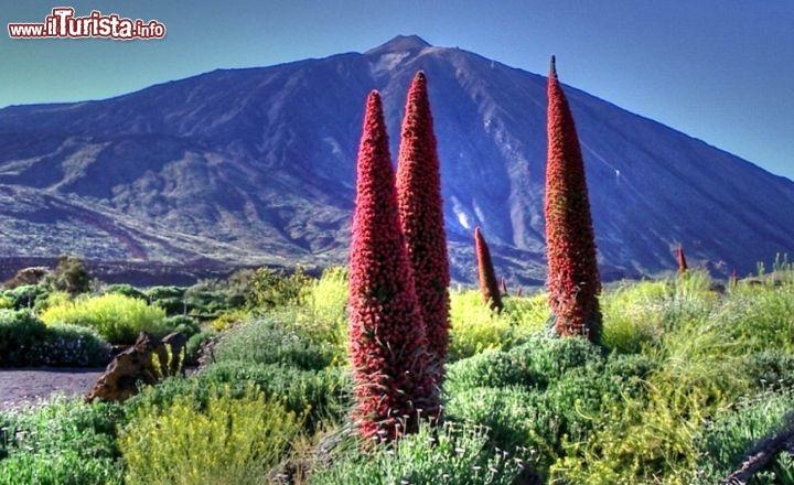 Il vulcano del teide a tenerife isole canarie foto for Apri le foto del piano