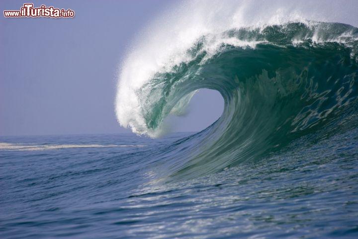 Una grande onda dell 39 oceano pacifico perfetta foto - Foto di animali dell oceano ...