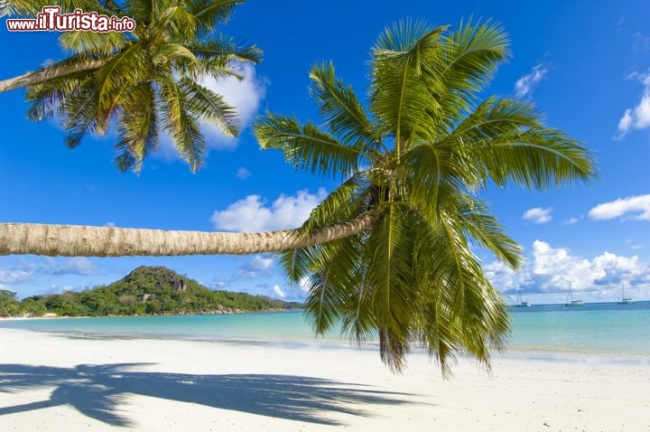 Palme spettacolari in una delle magnifiche spiagge for Disegni di casa sulla spiaggia tropicale