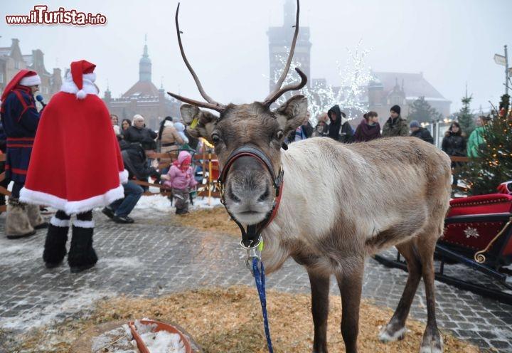Nomi Renne Babbo Natale.Immagini Delle Renne Di Babbo Natale