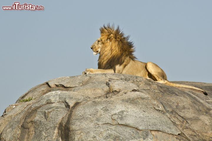 Le foto di cosa vedere e visitare a Serengeti