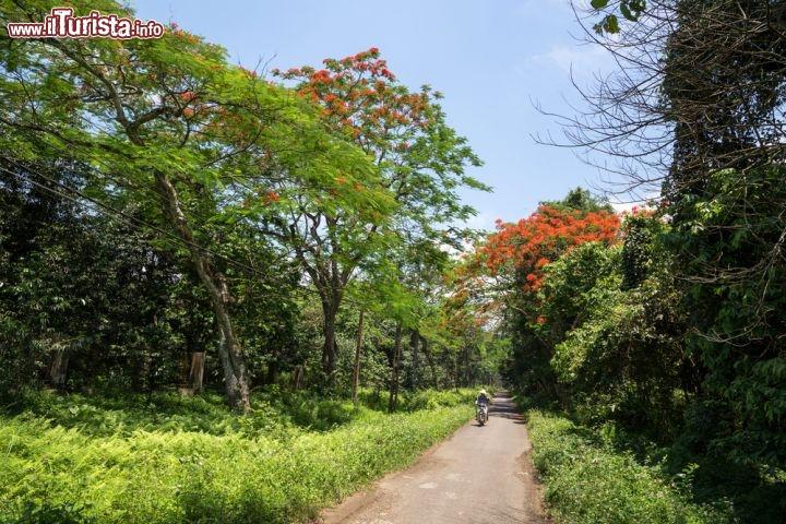 Le foto di cosa vedere e visitare a Ninh Binh