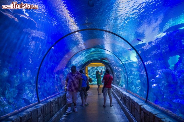 Immagine Shark reef Aquarium presso il  Mandalay Bay Resort di Las Vegas - © Kobby Dagan / Shutterstock.com