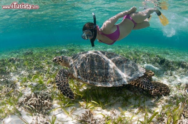 Snorkeling a bali incontro con tartaruga indonesia for Lago tartarughe