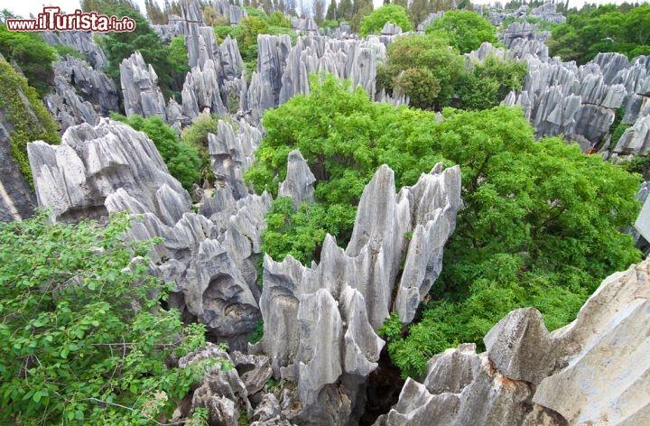 Le foto di cosa vedere e visitare a Kunming