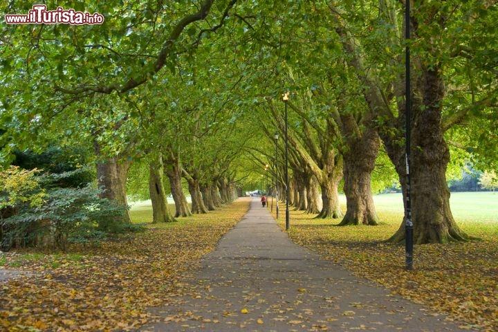 Autunno In Un Parco Di Cambridge Inghilterra Foto