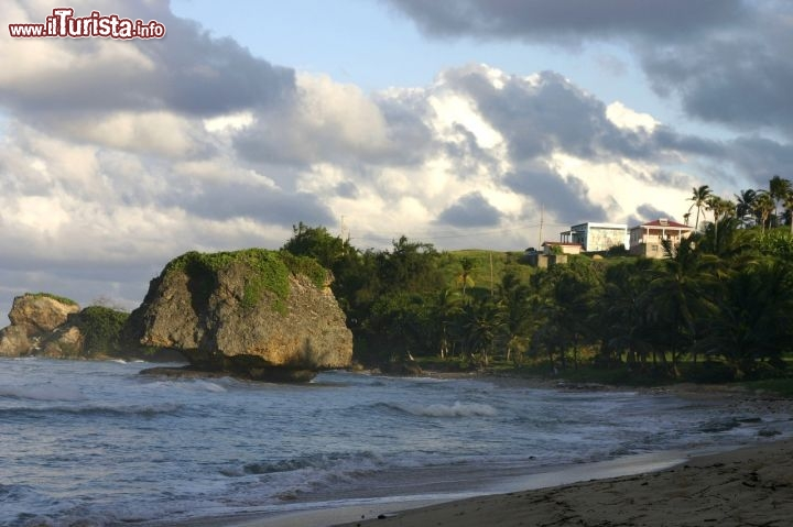 Immagine la costa di Bathsheba,  Barbados orientale, presenta alternanze di rocce e sabbie - Fonte: Barbados Tourism Authority