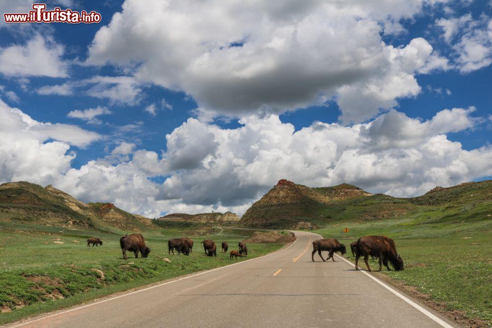 Le foto di cosa vedere e visitare a North Dakota