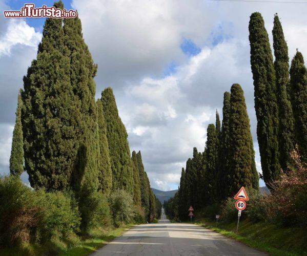 Le foto di cosa vedere e visitare a Bolgheri