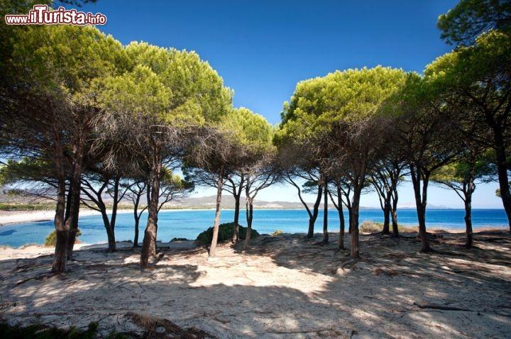 All 39 ombra sulla spiaggia di budoni sardegna foto budoni for Budoni mare