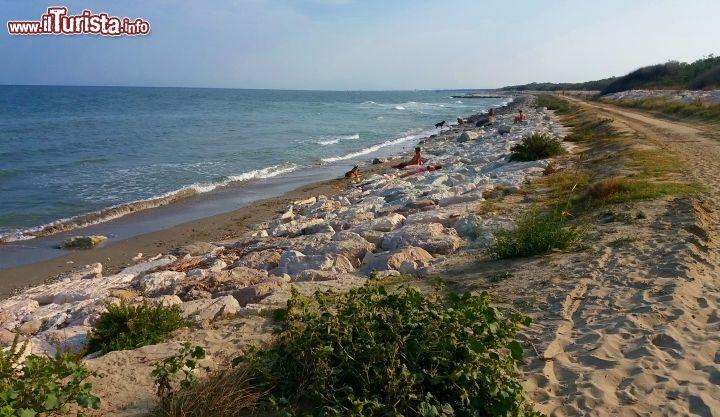 Matrimonio Spiaggia Riviera Romagnola : Un tratto di riviera romagnola selvaggia non foto