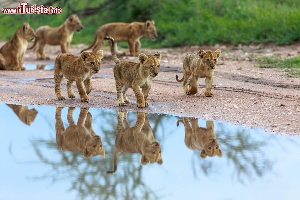 Le foto di cosa vedere e visitare a Amboseli