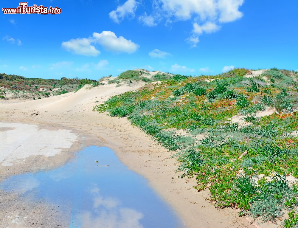 Dune di sabbia tra la spiaggia e lo stagno di foto - Immagini di spongebob e sabbia ...