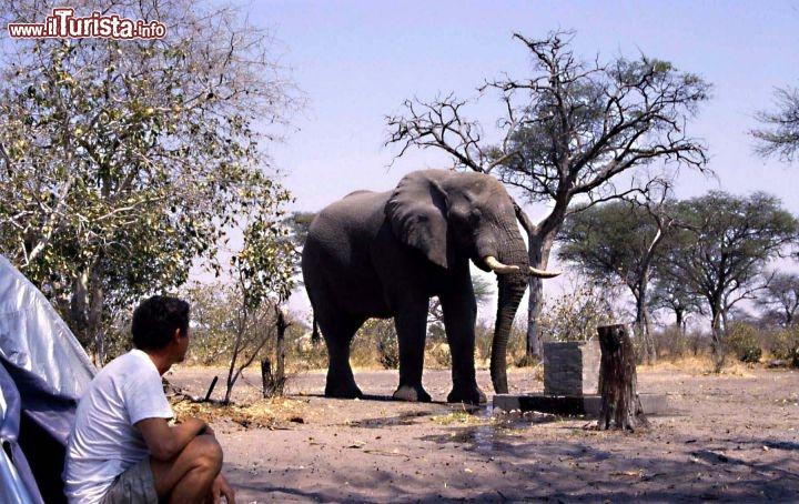 Le foto di cosa vedere e visitare a Botswana