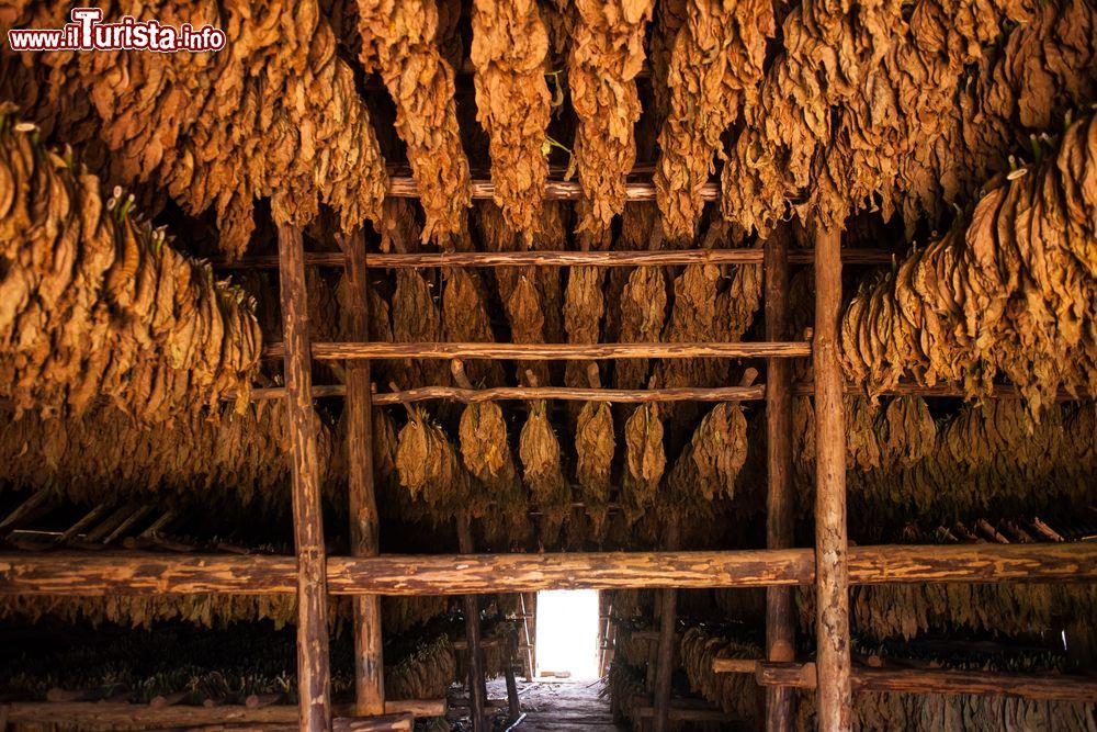 L 39 interno di una casa de tabaco dove viene foto vinales for Interno di una casa