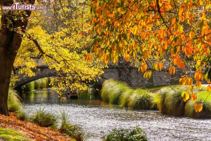 Il foliage autunnale degli alberi con tonalit foto christchurch for Puglia garden city ny
