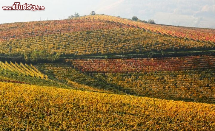 Le foto di cosa vedere e visitare a Piemonte