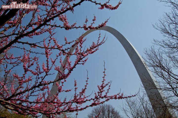 Immagine Il Gateway Arch fotografato in primavera a St Louis - © Missouri Division of Tourism
