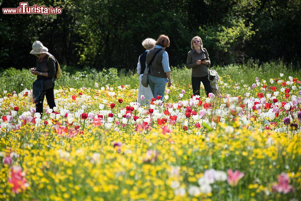 Giardinity primavera - I Bulbi di Evelina Pisani Vescovana