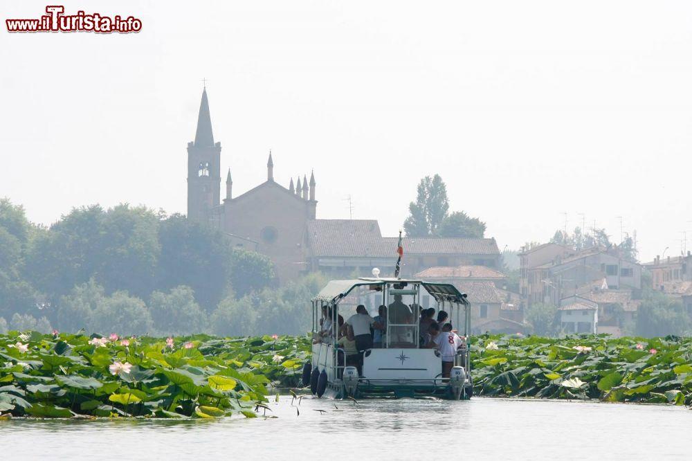 7 Fiori Di Loto Sardegna.La Fioritura Dei Fiori Di Loto A Mantova Con I Barcaioli Del Mincio