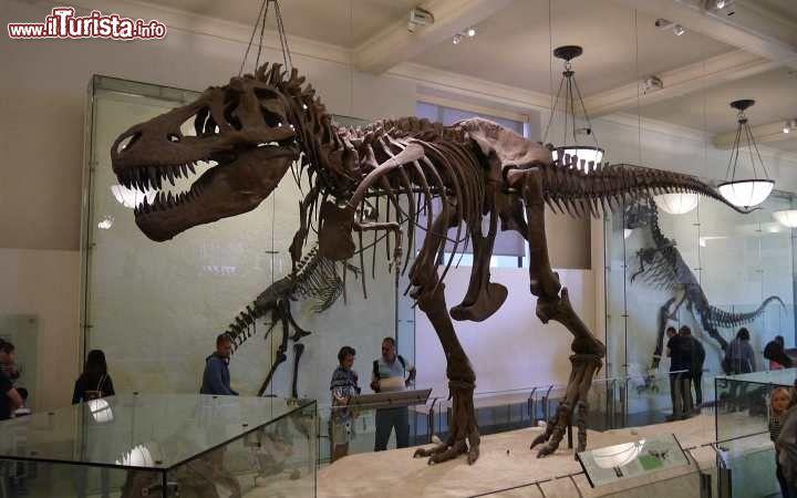 Museo Storia Naturale New York.Il Museo Di Storia Naturale A New York City Foto New York City