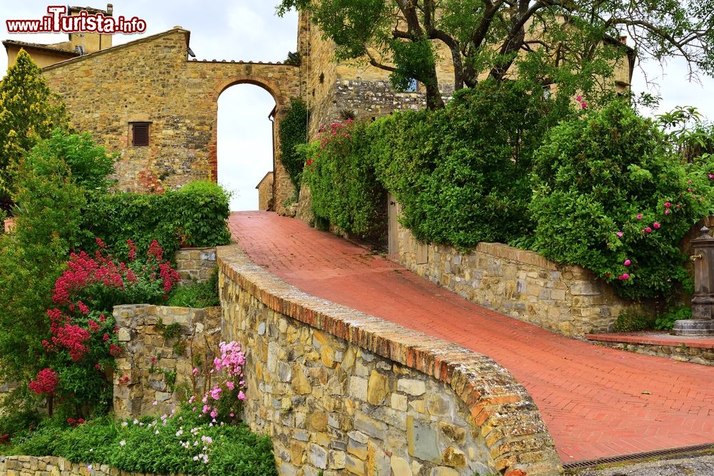 Le foto di cosa vedere e visitare a Tignano
