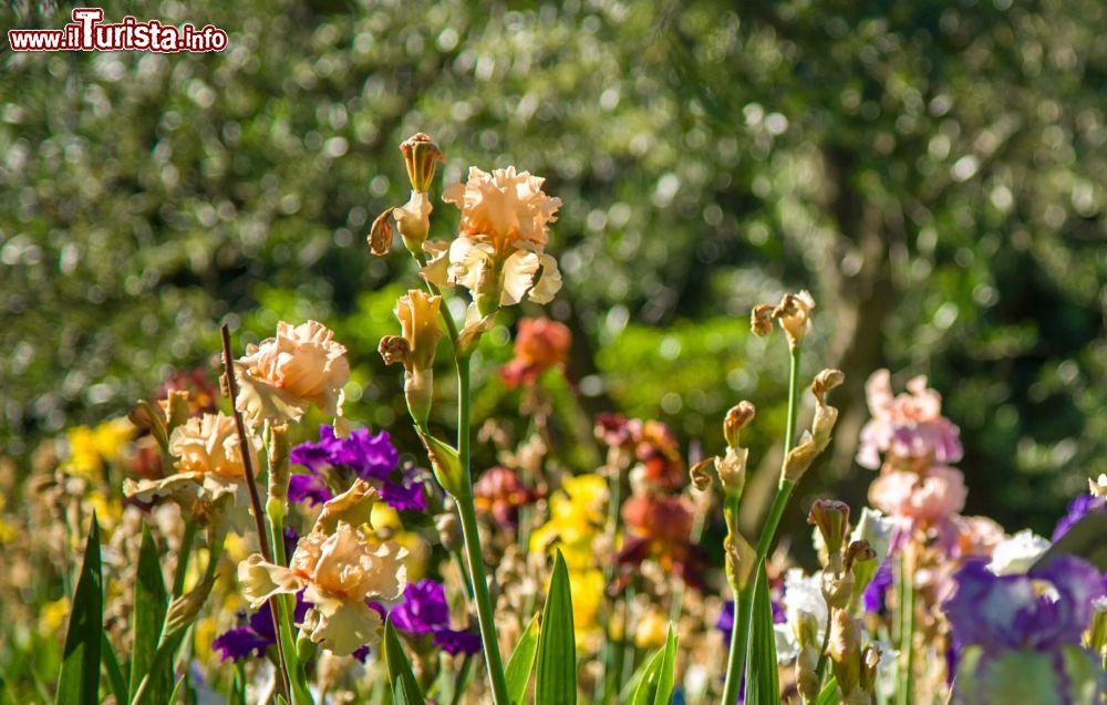 Apertura Giardino dell'Iris Firenze