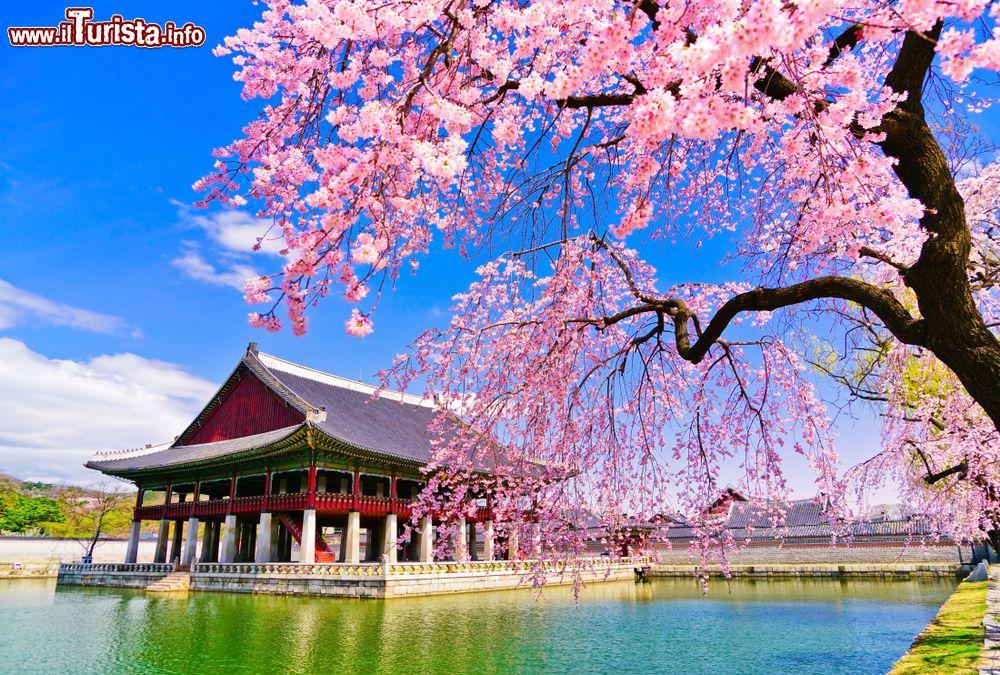 Le foto di cosa vedere e visitare a Corea del Sud