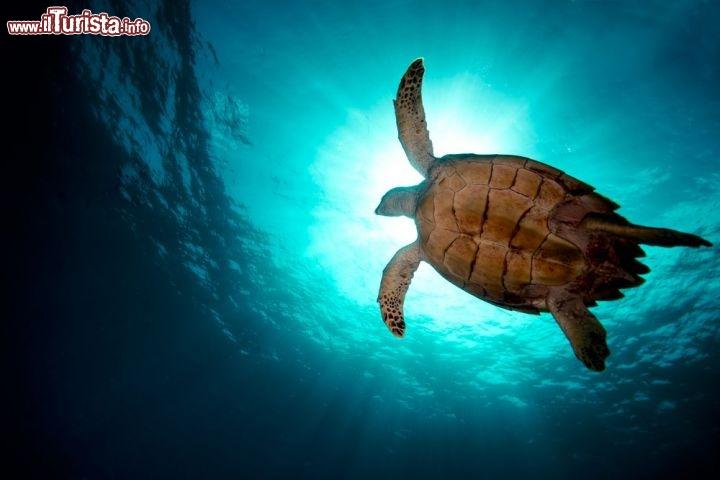 Le foto di cosa vedere e visitare a Cooper Island