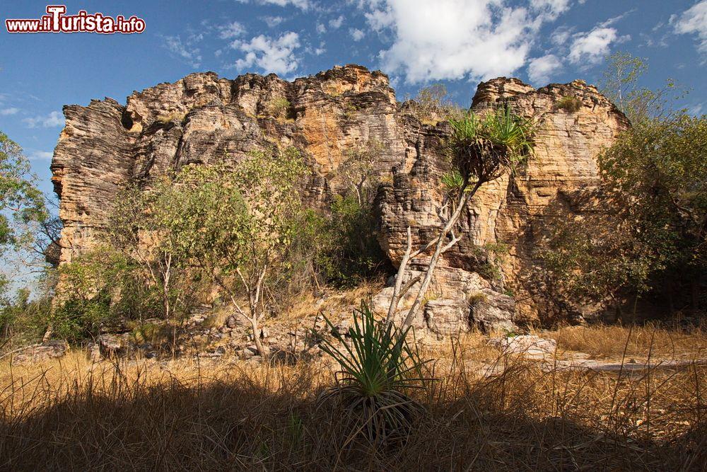 Le foto di cosa vedere e visitare a Jabiru