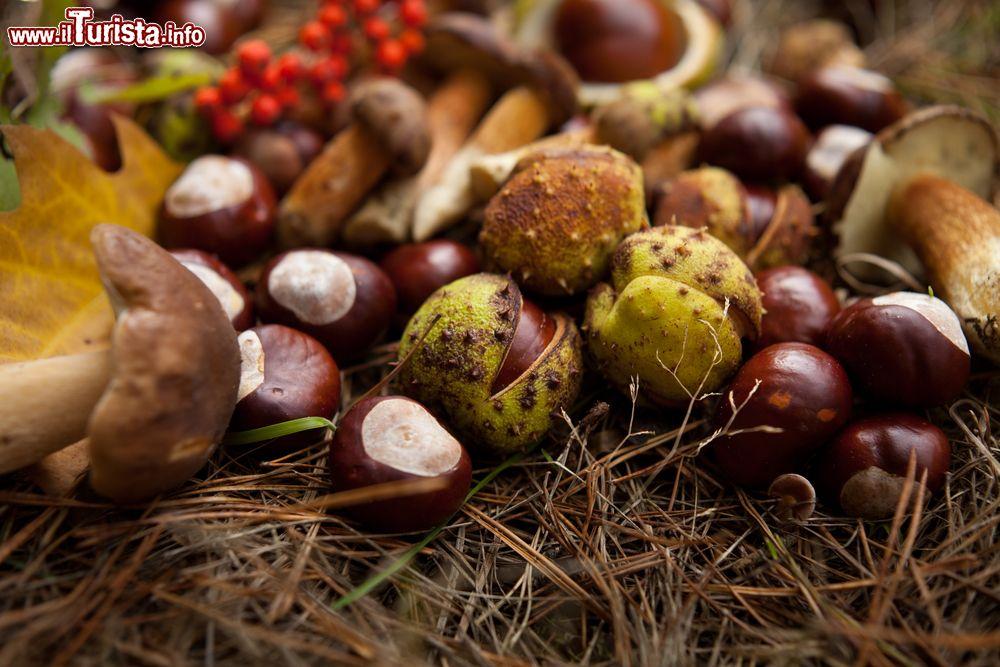 Sagra della castagna e del fungo porcino Roccamonfina