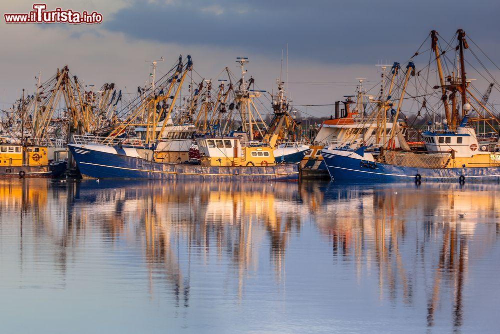 Le foto di cosa vedere e visitare a Lauwersoog