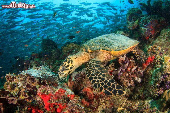 La fauna sottomarina delle acque delle maldive foto - Foto di animali dell oceano ...