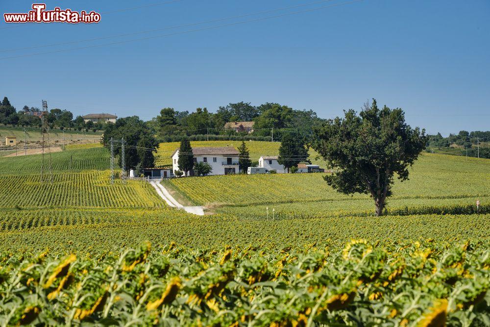 Le foto di cosa vedere e visitare a Castelfidardo