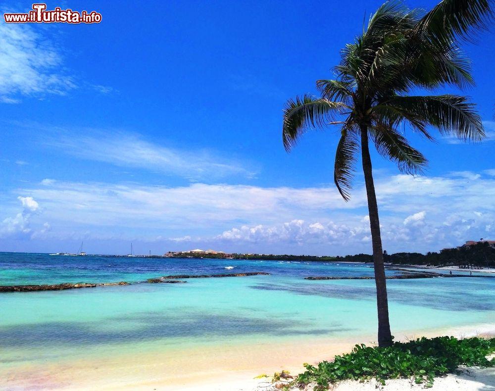 Palma Da Cocco Su Una Spiaggia Di Puerto Aventuras Foto