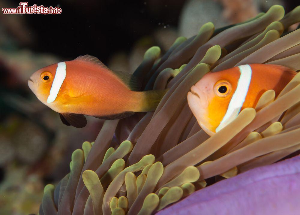 Stupendi pesci tropicali nelle calde acque dell 39 atollo - Foto di animali dell oceano ...