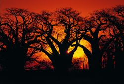 Infuocato tramonto in Sudafrica - Fonte South African Tourism