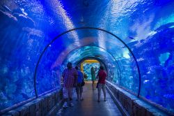 Shark reef Aquarium presso il  Mandalay Bay Resort di Las Vegas - © Kobby Dagan / Shutterstock.com