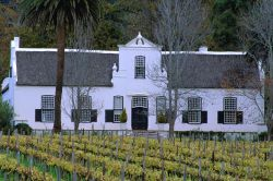 Vigneti in Sudafrica - Fonte South African Tourism