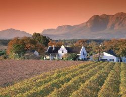 Tour tra i vigneti del Sudafrica - Fonte South African Tourism