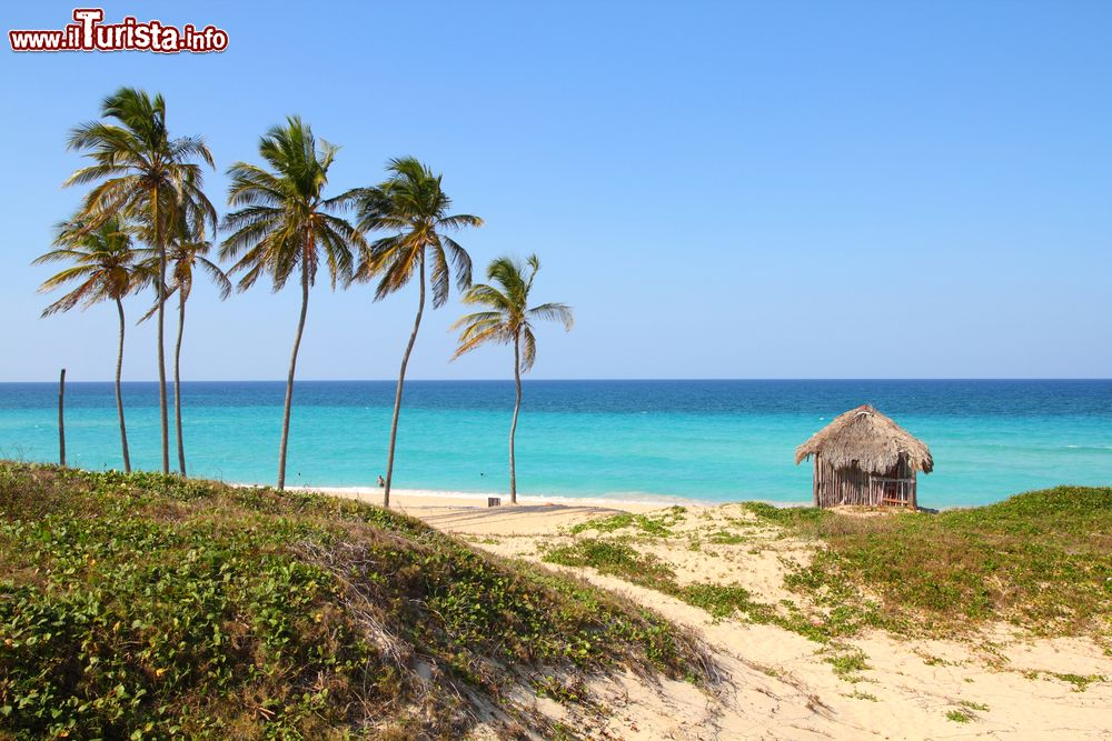 Le foto di cosa vedere e visitare a Playa del Este