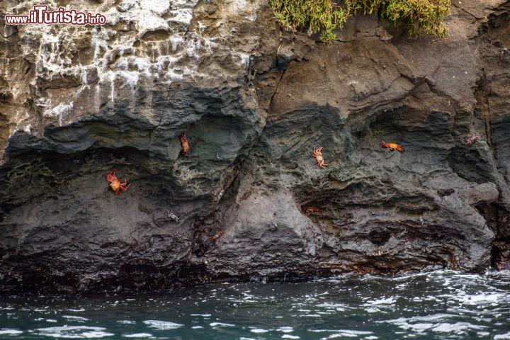 Granchi sulla costa rocciosa dell 39 isola di foto for Isola che da il nome a un golfo della sardegna