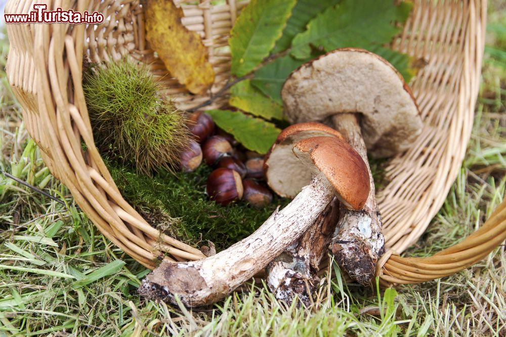 Sagra del fungo e della castagna Vivo d'Orcia