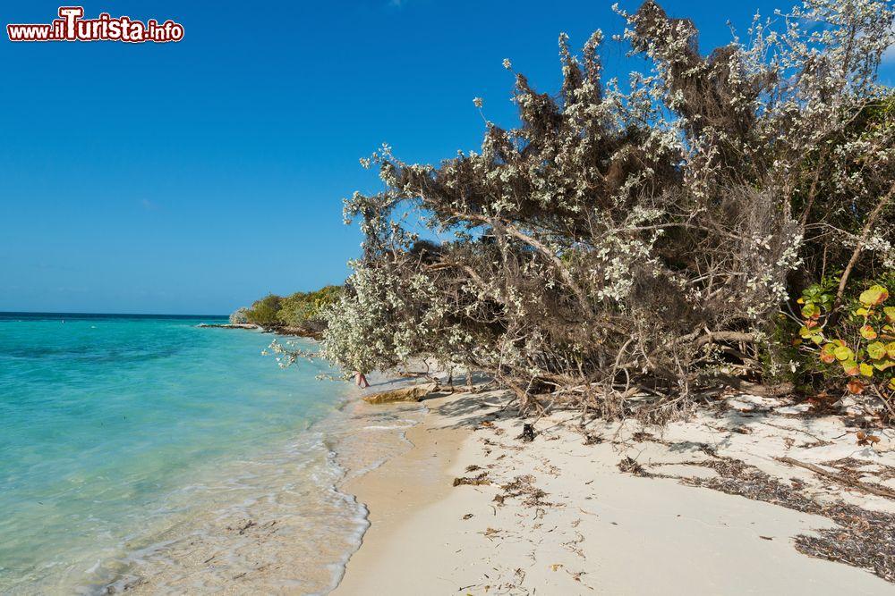 Le foto di cosa vedere e visitare a Berry Islands