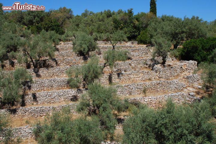 Terrazze coltivate a ulivi sull\'isola di ... | Foto Meganissi