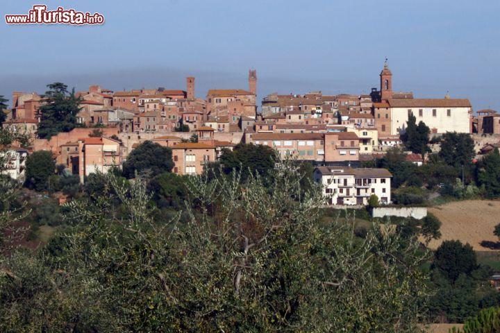 Le foto di cosa vedere e visitare a Torrita di Siena