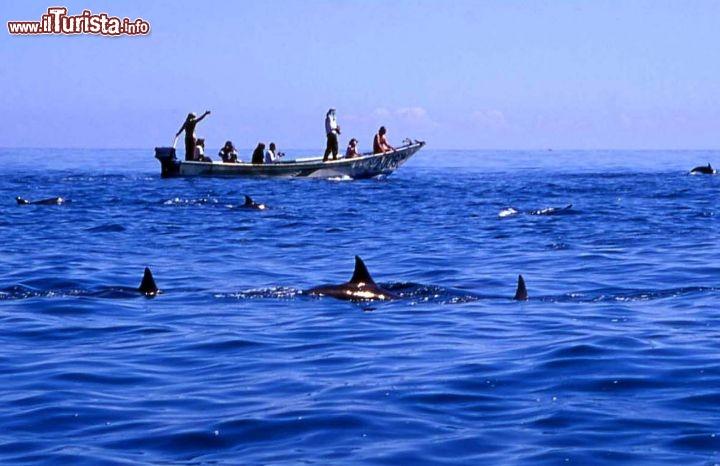 Le foto di cosa vedere e visitare a Socotra